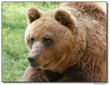 bear-10222-sm.JPG