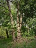 treecan1016.JPG