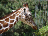 giraf1310.JPG