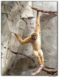 monkey2-1416.JPG