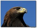 eagle-4842-sm.JPG