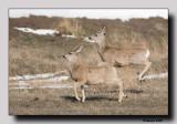 'Dance of the Deer'