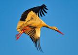Stork Take Off