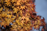 November 2007 - Tree in Olympiades 75013