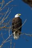 Birds at Windsor Lake