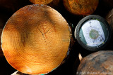 La bûche panoramique - The panoplanet log
