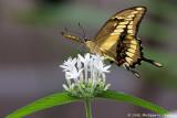 La serre aux papillons ::Gallery::