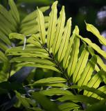 New tree leaves