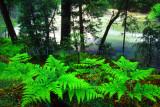Wawona Creek