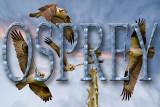 Osprey Photos