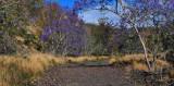 jacaranda trail