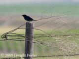 Some Roadtrip Birds