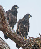 leaving the nest.jpg