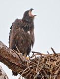 squawking.jpg