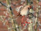 Fåglar in på  knuten 2010