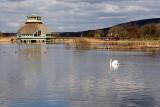 Hornborgasjön  Fågeludden 2008