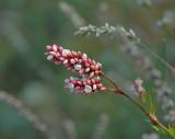 Plants and Botanicals