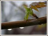 April 14 - April Showers
