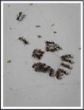 April 15 - Ants