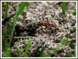 April 16 - Ants
