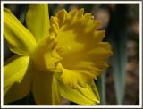April 17 - Hello, Yellow