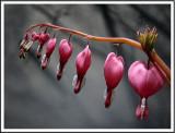 April 18 - Pink and Gray