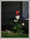 April 22 - In the Neighborhood