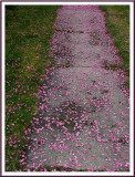 April 30 - Petals