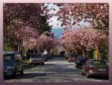 BlossomingStreet6354.jpg