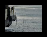 Boats005-Maassluis