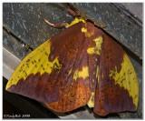 Moth September 3