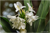Bloom October 23 *
