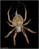 Creepy Spider November 6 *