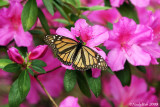 Butterfly March 30