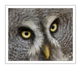 Looking at you 1.jpg