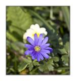 Spring flower .jpg