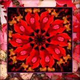 life is a kaleidoscope