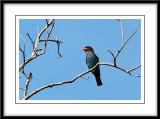 Dollar Bird.jpg