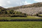 Grassland in The Burren