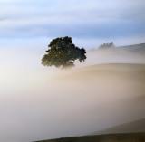 Tree in a misty world