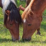 Wild Horses, head to head