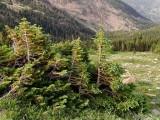 Approaching the treeline, on Trail Ridge Road