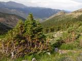 At the treeline, on Trail Ridge Road