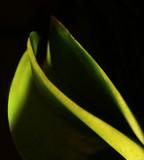 Orchid Leaves 2.jpg