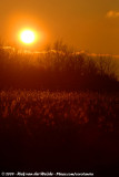 Sunset at Starrevaart