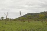Open wooded savannah