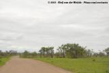 Wooded landscape of southern Kruger