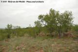 Kruger's Bushland