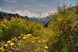 Colorful Pico do Arieiro