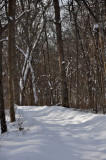 snowy path1